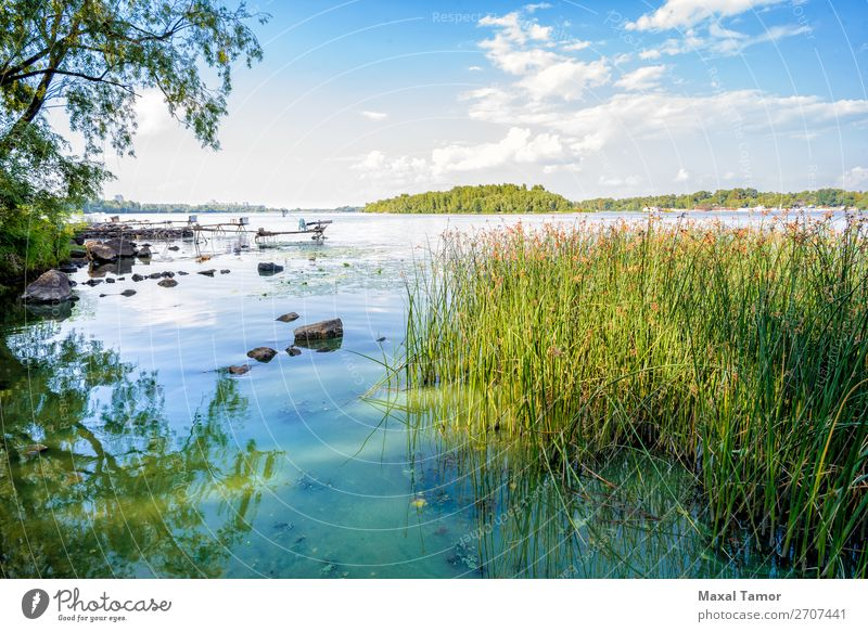 Reeds and Dnieper River Herbs and spices Summer Financial institution Environment Nature Landscape Plant Sky Clouds Wind Tree Grass Forest Coast Lake Growth