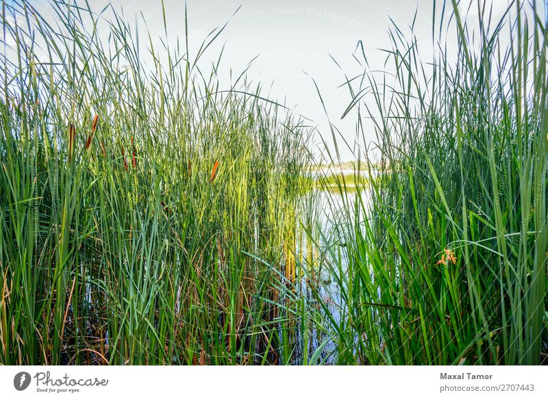 Reeds and River Herbs and spices Financial institution Environment Nature Landscape Plant Sky Wind Tree Flower Grass Coast Pond Lake Growth Natural Blue Green