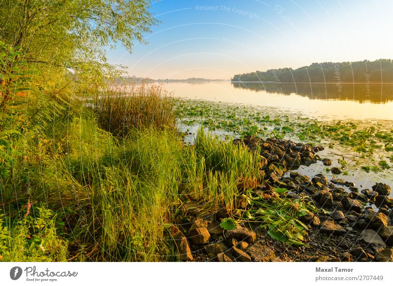 View of the Dniper River at morning Vacation & Travel Sun Fog Tree Grass Park Yellow Green Peace Dnieper Dnipro Kiev Kyiv Ukraine calm light Magic over peaceful