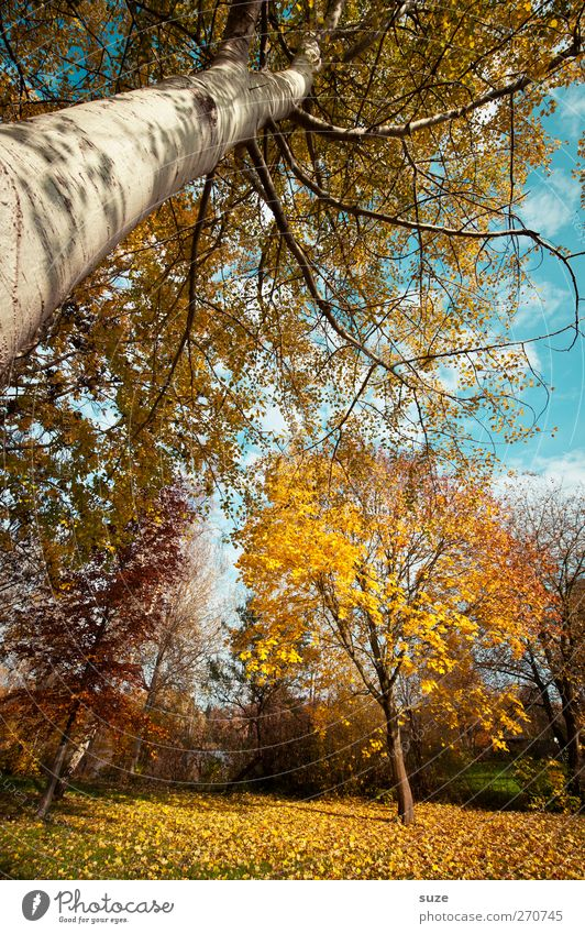 It´s Määätschik Environment Nature Landscape Plant Elements Air Sky Autumn Climate Beautiful weather Tree Leaf Forest Growth Large Funny Crazy Blue Yellow