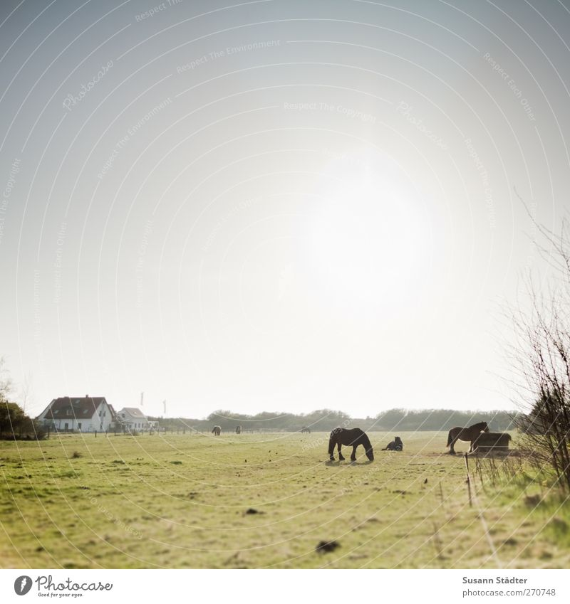 Nature Sun House (Residential Structure) Field Wild animal Wild Group of animals Horse Village Pasture Cattle breeding Detached house Hiddensee Fishing village