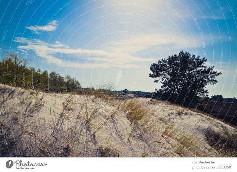 Sky Vacation & Travel Tree Summer Beach Clouds Environment Grass Sand Energy Adventure Illuminate Beautiful weather Desert Kitsch Dune
