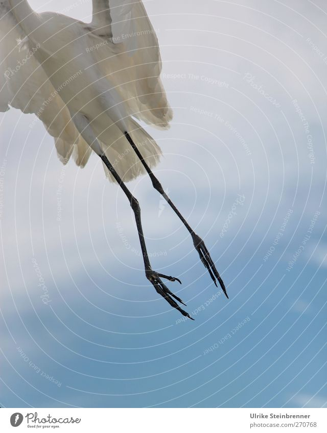 Sky Nature White Animal Clouds Environment Spring Air Legs Bird Flying Wild animal Free Beginning Wing Feather