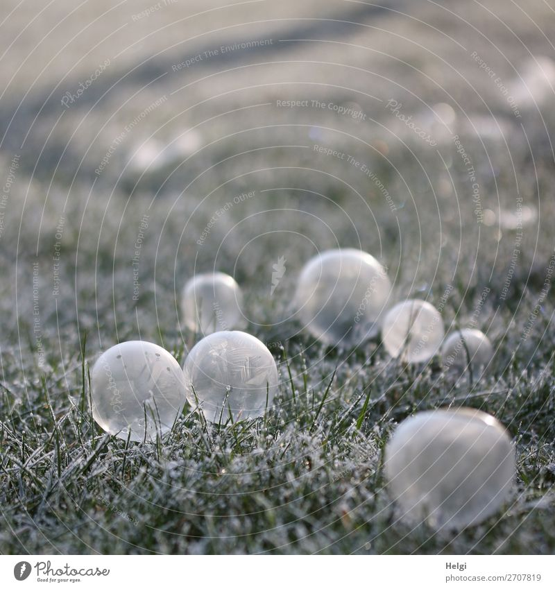 many frozen side bubbles lie on a meadow with hoarfrost Environment Nature Plant Winter Ice Frost Grass Garden Soap bubble Sphere Freeze Lie Esthetic