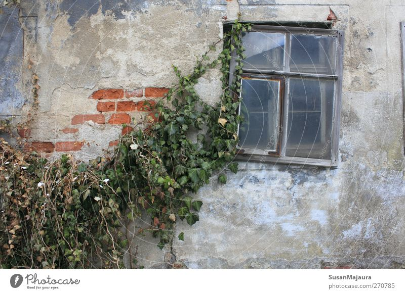 Ravages of time Nature Old Plant House (Residential Structure) Window Wall (building) Gray Wall (barrier) Time Facade Poverty Concrete Esthetic Broken Gloomy