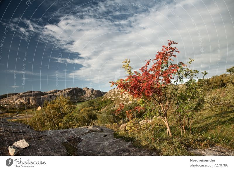 Sky Nature Vacation & Travel Tree Plant Summer Colour Loneliness Clouds Landscape Mountain Autumn Freedom Rock Climate Change