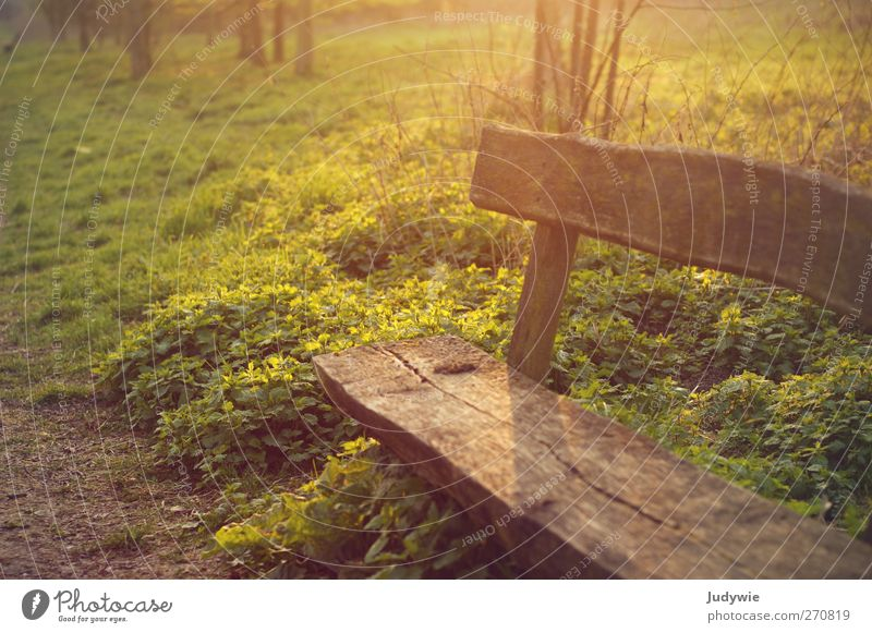 Have a seat. Relaxation Calm Leisure and hobbies Summer Environment Nature Sun Sunrise Sunset Autumn Plant Bushes Park Bench Park bench Wooden bench Sit Old