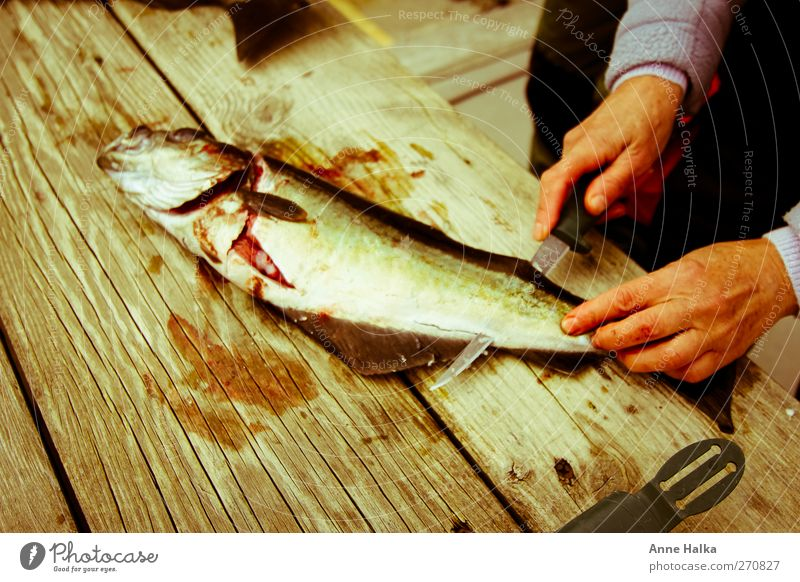 Fillet charcoal in Alt Hand Fish 1 Animal pollack Charcoal burner Blood fillet cut Knives fillet knives gut Fishing (Angle) fishing Scales bone Wood