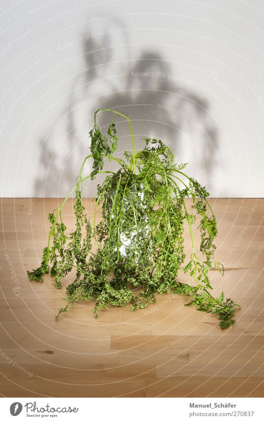 HuiPuh the herb ghost Plant Flower Foliage plant Exceptional Threat Dark Creepy Brown Green Moody Sadness Grief Fear Whimsical Table Vase Colour photo