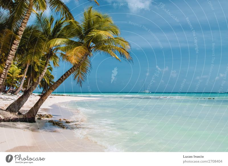 Saona Island near Punta Cana, Dominican Republic Vacation & Travel Tourism Trip Summer Summer vacation Beach Ocean Waves Environment Nature Sand Tree Leaf Coast