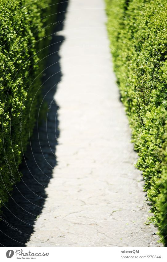 Nature Green Lanes & trails Art Esthetic Gate Symmetry Accuracy Horticulture Hedge Forest path Trimmed
