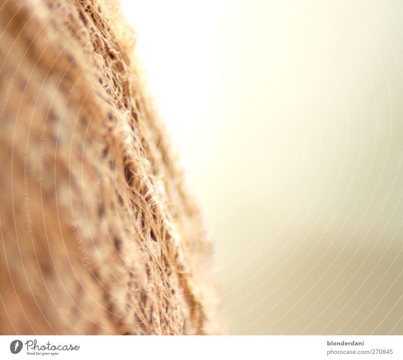 structure Nature Summer Plant Brown Gray Calm Loneliness Mysterious Far-off places Palm frond Coconut palm Macro (Extreme close-up) Bast Colour photo