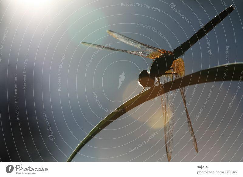 Nature Sun Animal Relaxation Wild animal Sit Wait Esthetic Insect Sunbathing Dazzle Lens flare Dragonfly