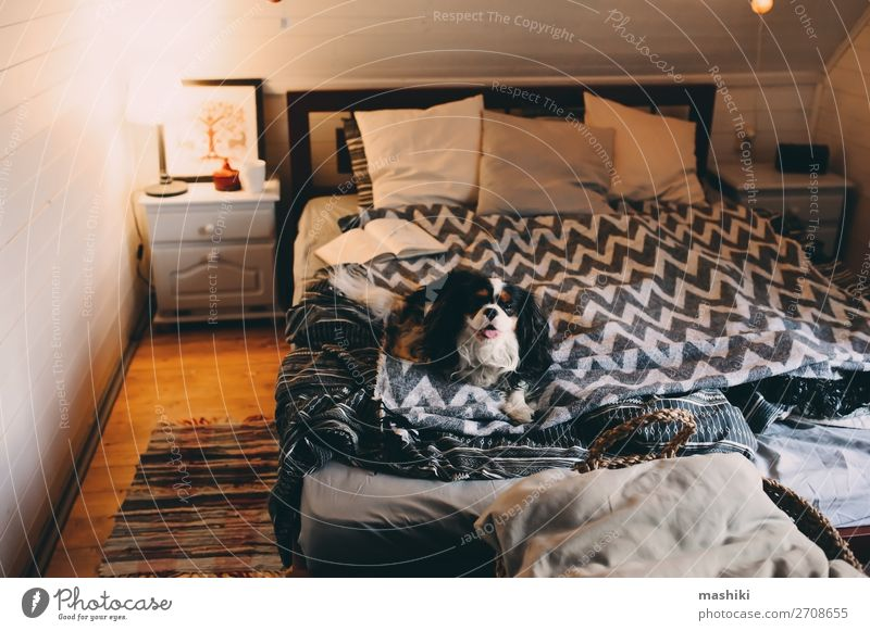 cozy winter home with dog sleeping on bed Tea Lifestyle Relaxation Leisure and hobbies Reading Winter House (Residential Structure) Book Autumn Warmth Hut Dog