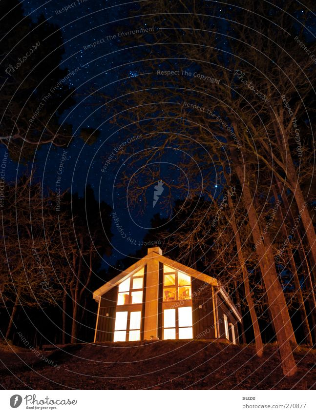 Nature Vacation & Travel Tree House (Residential Structure) Forest Environment Landscape Dark Small Stars Illuminate Elements Hut Seasons Night sky Starry sky