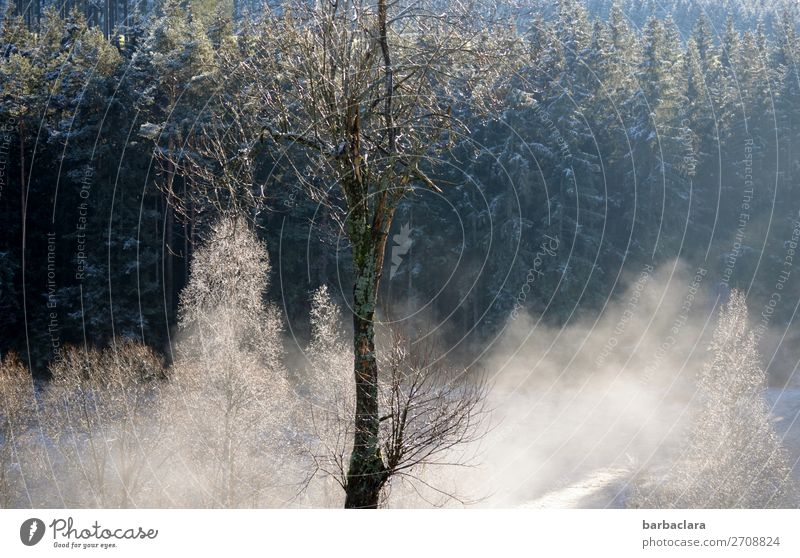 Winter morning in the Black Forest Landscape Fog Ice Frost Snow Tree Illuminate Dark Bright White Moody Beginning Climate Nature Environment Colour photo