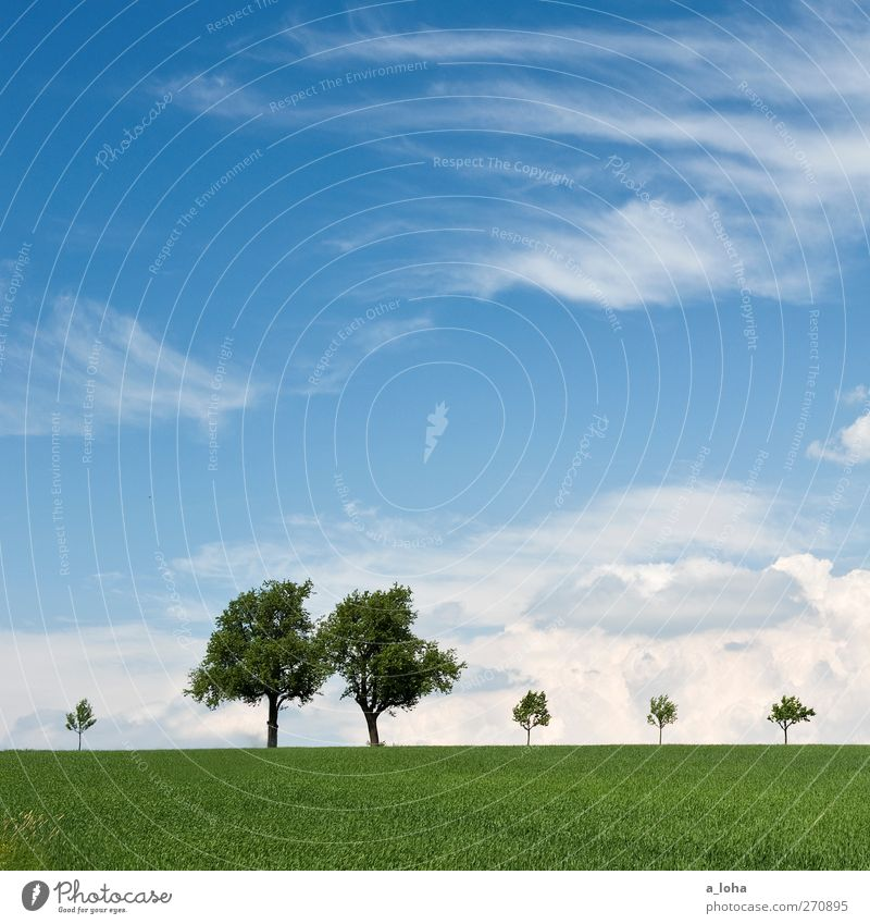 Sky Nature Blue Old Green Tree Clouds Far-off places Environment Landscape Grass Spring Small Horizon Field Natural