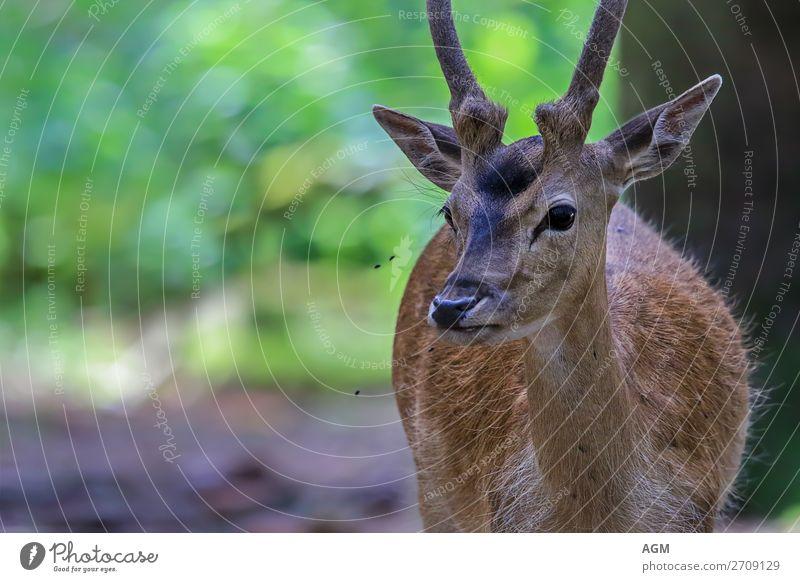 fallow deer Life Summer 1 Animal To feed Esthetic Watchfulness Nature raffia skin Fallow deer fallow spit Blanket meat production Generation antlers Deer