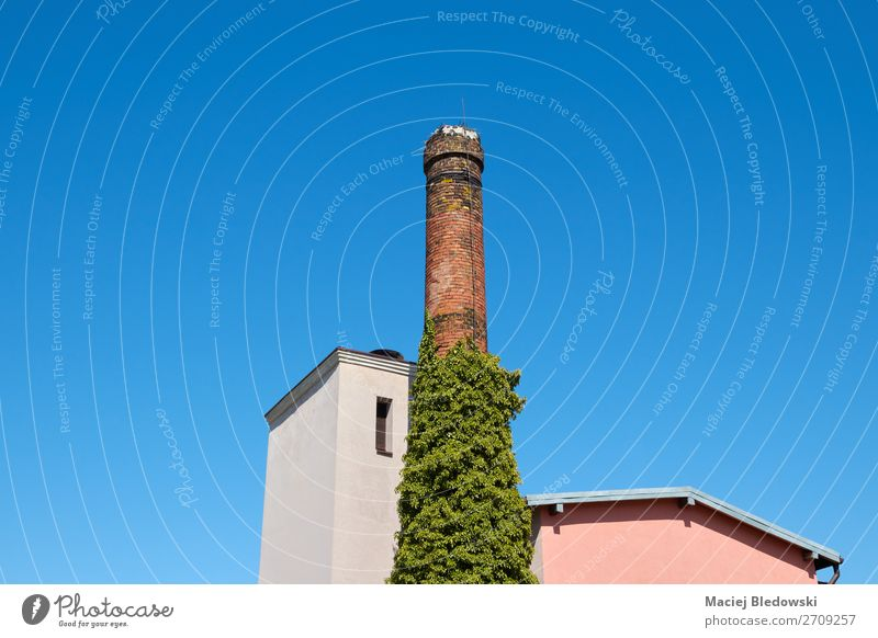 Old brick chimney against the blue sky. Plant Cloudless sky Beautiful weather Ivy House (Residential Structure) Building Architecture Roof Chimney Blue Blue sky