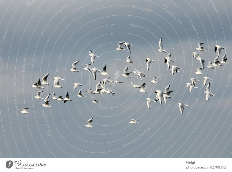 Sky Nature Summer Blue White Animal Life Environment Natural Bird Gray Flying Wild animal Uniqueness Tall Seagull