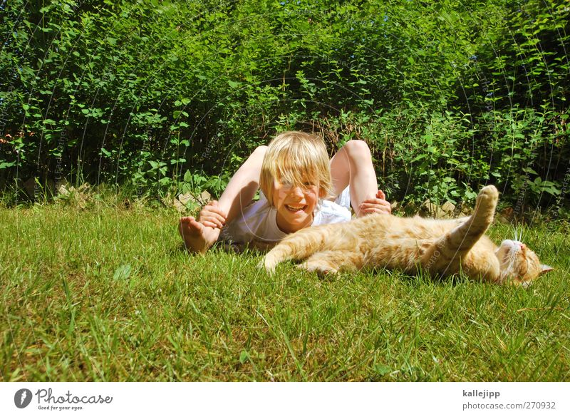 Cat Human being Nature Green Plant Summer Animal Environment Meadow Sports Life Playing Grass Boy (child) Head Laughter