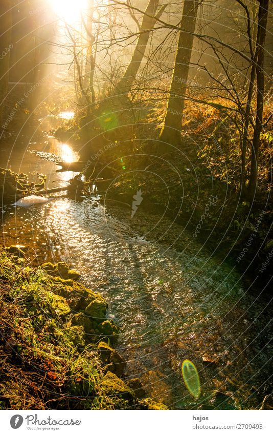 Sunbeams in the forest on a brook Relaxation Winter Nature Warmth Tree Forest Brook Bright Soft Idyll solar phenomenon Light (Natural Phenomenon) spot Whale bac