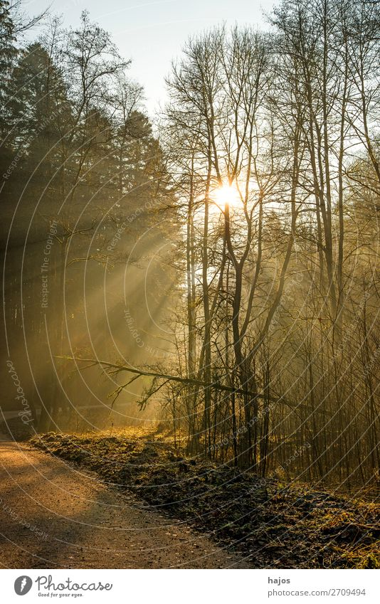 Sunbeams in the forest Relaxation Winter Nature Warmth Bright Soft Idyll spot luminescent Illuminate Forest Lanes & trails Smooth Mystic fabulously beautiful