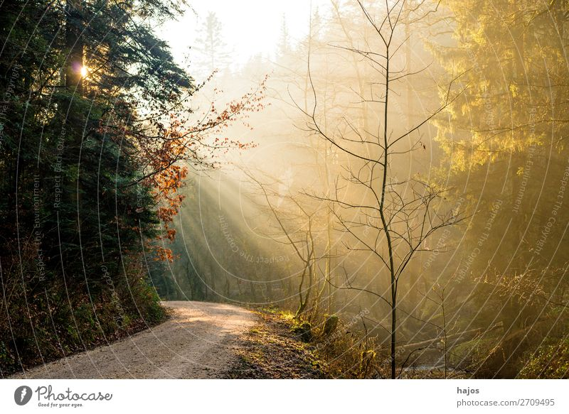 Sunbeams in the forest Relaxation Winter Nature Beautiful weather Warmth Bright Soft Idyll Stage lighting Lighting Light (Natural Phenomenon) Illuminate
