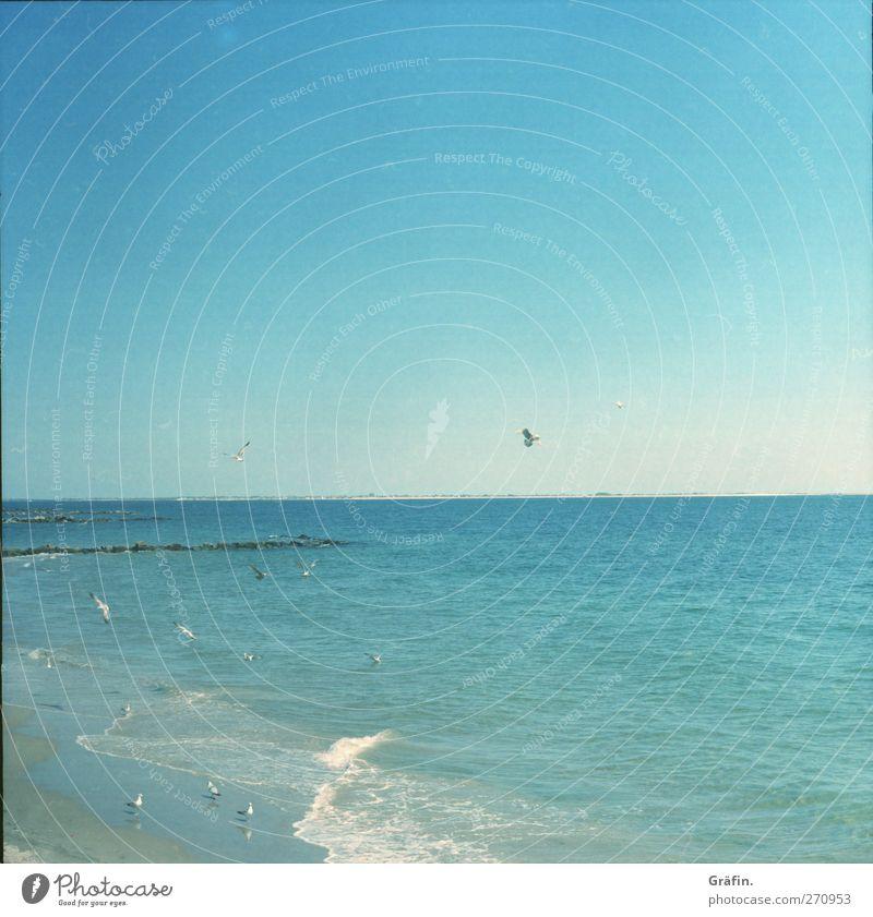 Sky Nature Blue Vacation & Travel Sun Summer Ocean Beach Calm Far-off places Freedom Sand Air Bird Waves Trip