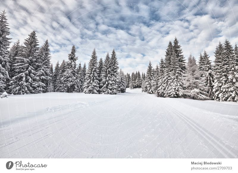 Winter landscape with cross-country skiing trails. Vacation & Travel Adventure Far-off places Expedition Snow Winter vacation Mountain Hiking Nature Landscape