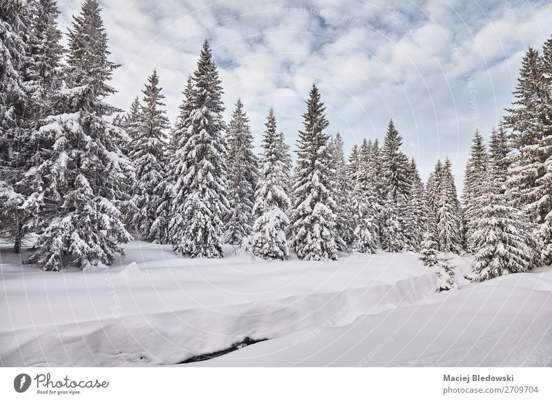 Winter landscape after heavy snowfalls. Sky Vacation & Travel Nature Landscape Tree Forest Far-off places Mountain Cold Snow Trip Snowfall Hiking Ice Adventure