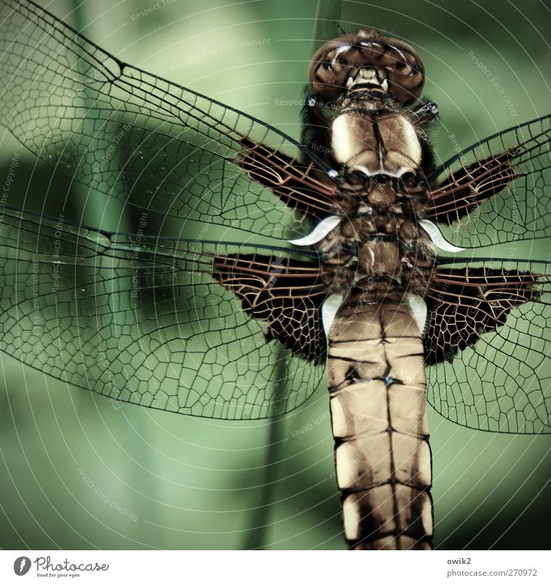 individualist Elegant Design Environment Nature Animal Climate Beautiful weather Wild animal Wing Dragonfly 1 Sit Wait Exotic Uniqueness Near Natural Green