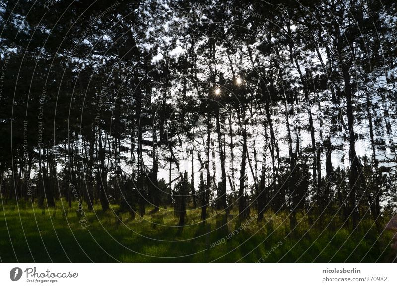 Hiddensee | :: 200 :: A thousand trees Vacation & Travel Trip Adventure Hiking Environment Landscape Climate change Tree Garden Meadow Forest Exceptional Dark