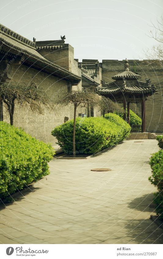 Chinese Spring Plant Tree Bushes Park Pingyao China Village Town Old town Skyline Deserted House (Residential Structure) Hut Palace Ruin Wall (barrier)