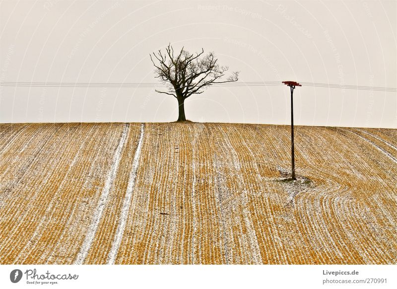 Tree 1 Winter Environment Nature Landscape Plant Earth Sky Bad weather Snow Cold Blue Yellow Gray Black White Field Agriculture Colour photo Exterior shot Day