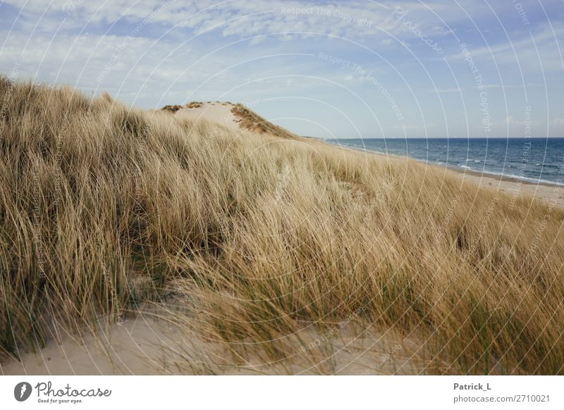 Kattegat Landscape Sand Air Water Sky Grass Bushes Waves Coast Beach Baltic Sea To enjoy Fantastic Free Friendliness Happy Beautiful Sustainability Natural