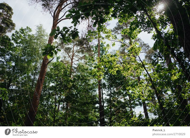 Woody Environment Nature Plant Climate Weather Beautiful weather Tree Leaf Wild plant Forest Esthetic Gigantic Natural Green Calm Purity Adventure Discover