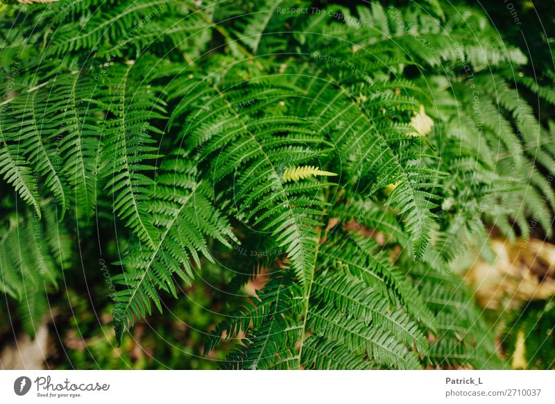fern town Plant Grass Bushes Fern Wild plant Breathe Esthetic Exotic Brash Glittering Uniqueness Thin Beautiful Point Thorny Green Serene Movement Relaxation