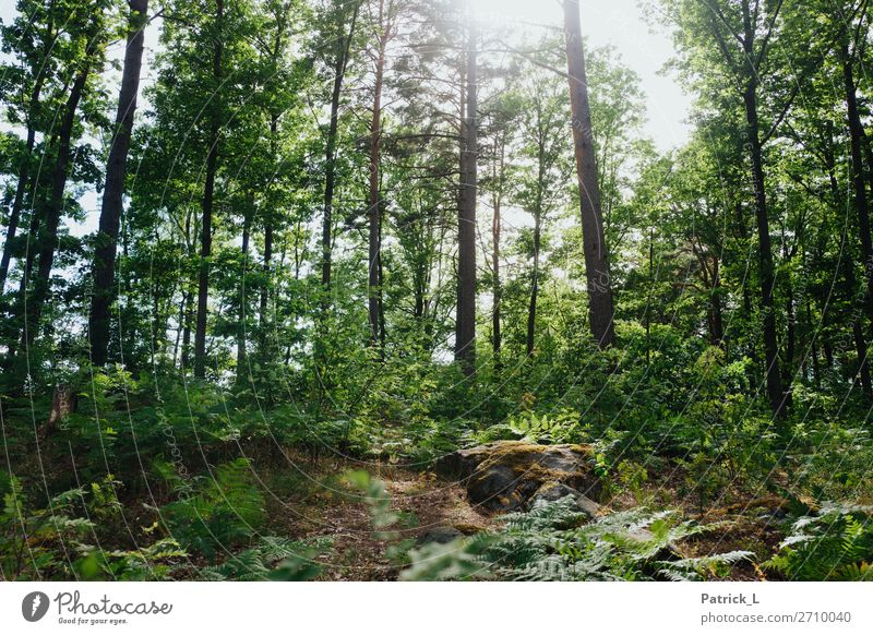 forest town Nature Summer Climate Plant Tree Grass Bushes Fern Wild plant Forest Hang Elegant Gigantic Beautiful Uniqueness Natural Green Euphoria Power Brave