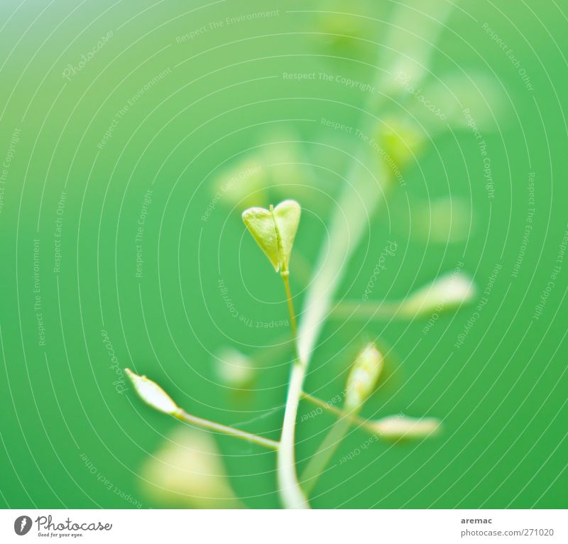 Nature Green Plant Leaf Love Grass Wild plant Heart-shaped