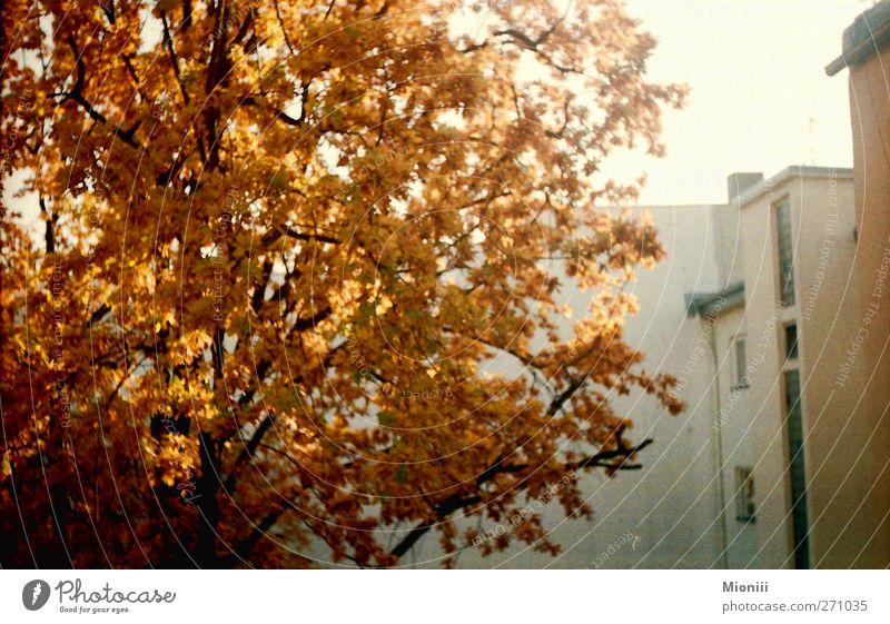 autumn orange Autumn Beautiful weather Tree Berlin Wall (barrier) Wall (building) Backyard Orange Environment Town Colour photo Exterior shot Deserted Day