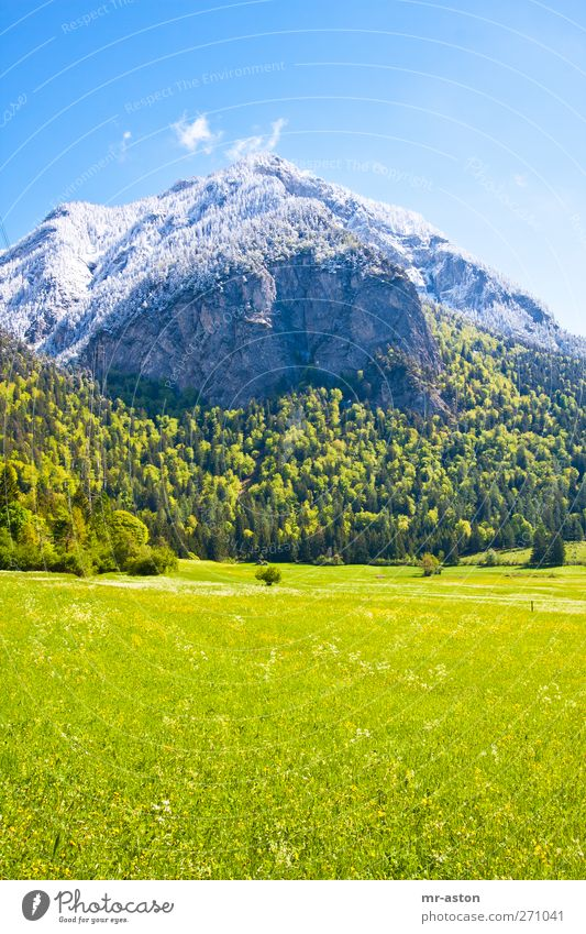 Puderzucker Sky Nature Blue Green Tree Plant Flower Environment Landscape Yellow Meadow Snow Mountain Grass Spring Gray