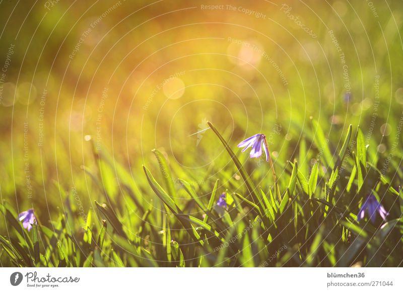 Nature Green Beautiful Plant Flower Yellow Life Spring Garden Blossom Moody Glittering Fresh Illuminate Cute Romance