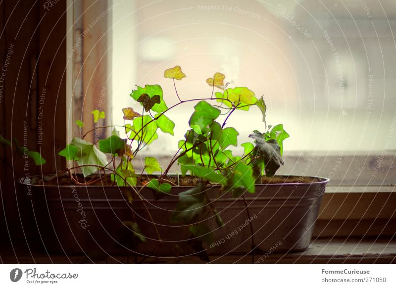 City Leaf Clouds House (Residential Structure) Window Spring Growth Decoration Roof Idyll Hut Upward Tin Dreary Ivy Shutter
