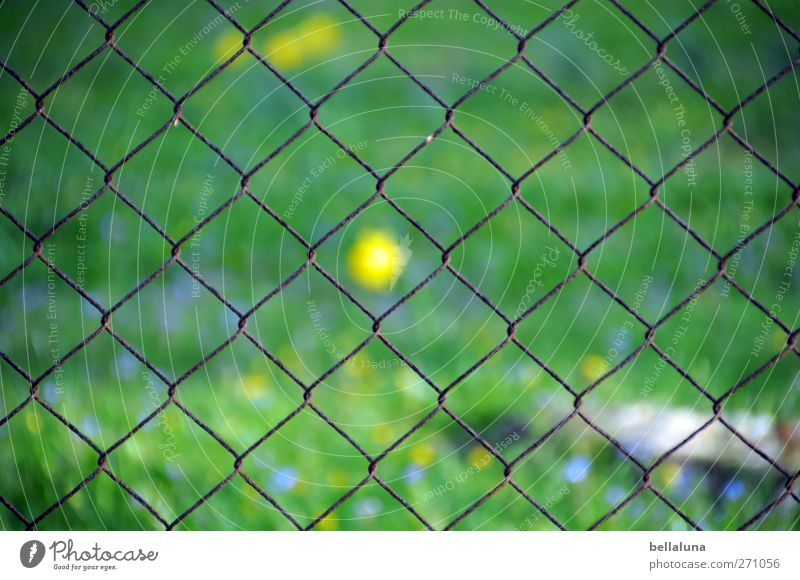 Nature Blue Green Plant Yellow Meadow Grass Spring Garden Blossom Beautiful weather Lawn Middle Baltic Sea Fence Center point