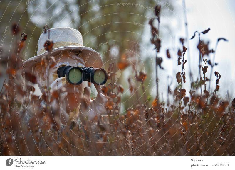 Head Observe Curiosity Hat Discover Hide Binoculars Hedge Cover Mistrust