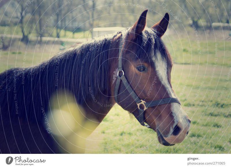 Animal Brown Horse Ear Logistics Friendliness Pasture Crockery Vintage Farm animal Communicative
