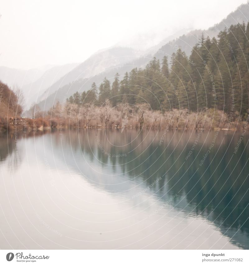 winter's day Environment Nature Landscape Plant Tree Lakeside Adventure Environmental protection Forest chill National Park China Asia Sichuan Winter Dreary