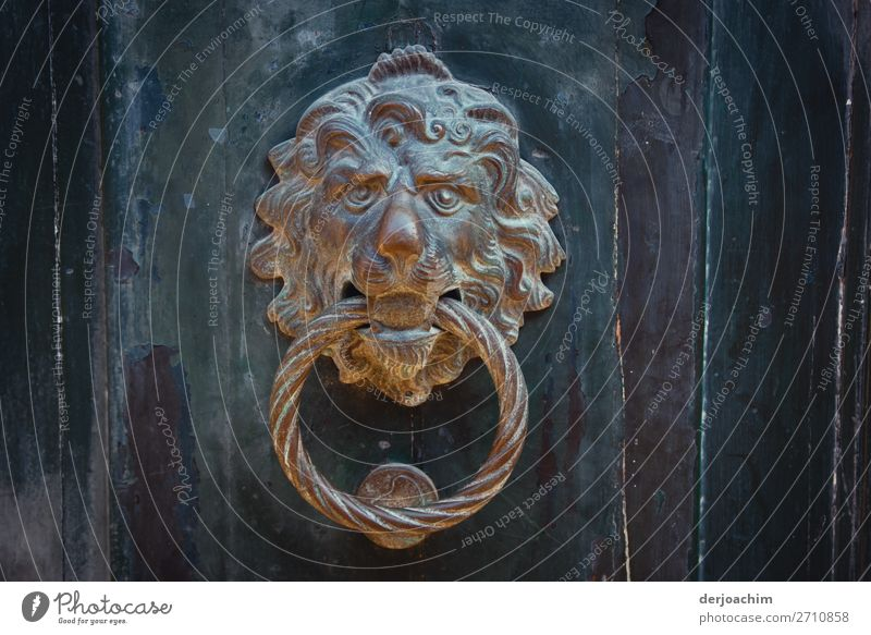 the lion at the door. A metal door knocker with a ring in its mouth. The door is made of wood. Design Joy Trip Summer Beautiful weather Town Venice Italy