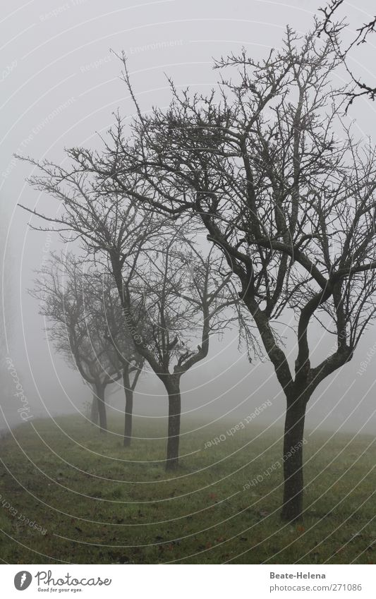 Sky Nature Green Tree Loneliness Landscape Dark Meadow Emotions Gray Brown Rain Weather Fog Natural Wait